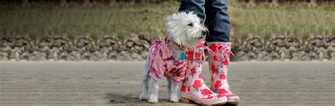 dogs accessories shopping apparel accessories dogs pet supplies shirts cold weather coats