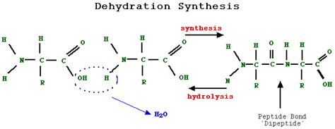 creatine dehydration present workout wears supplements fuel protein dehydration