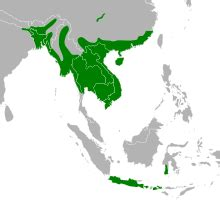 us map in python burmese python python molurus bivittatus overview