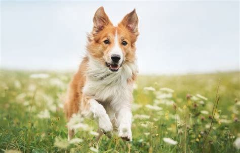 herbs for dogs your and the of the flea problems