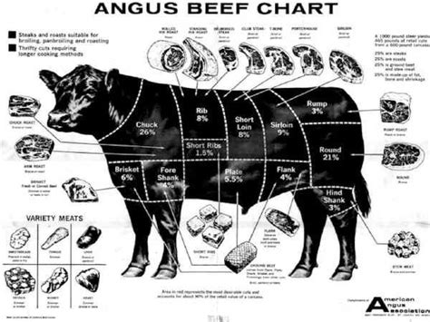 cow cuts diagram 113 best beef 1 primal cuts roasts guide