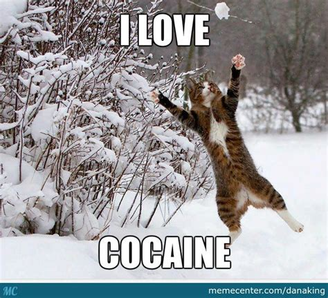 Cocaine Cat Meme - catch that ball of cocaine by danaking meme center