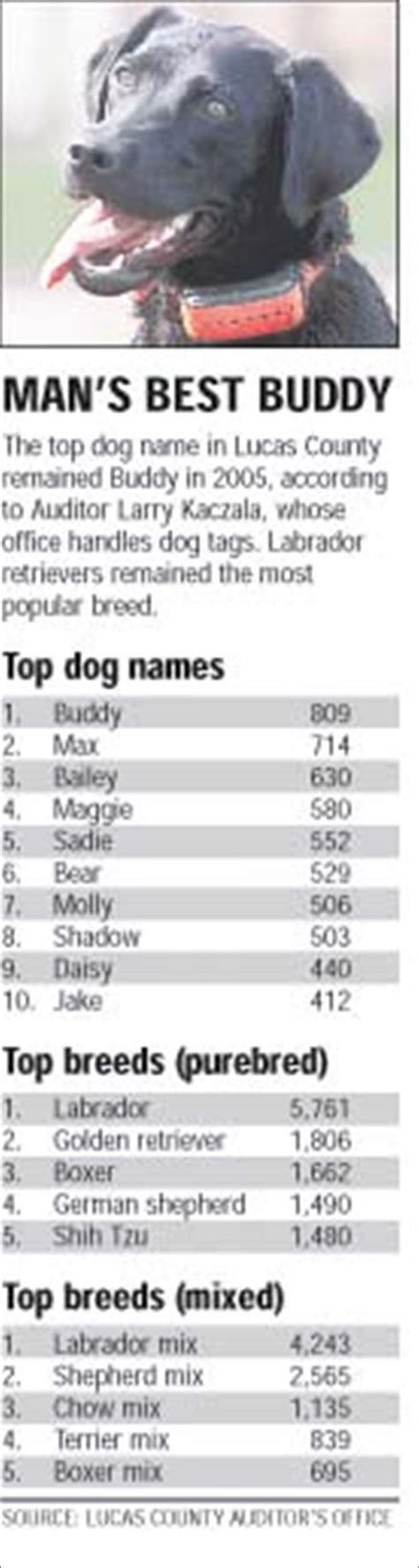 german names for dogs german names unique ideas for your boy models picture