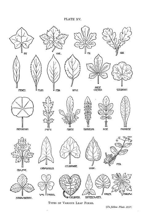design pattern nedir 1000 images about zentangle patterns on pinterest