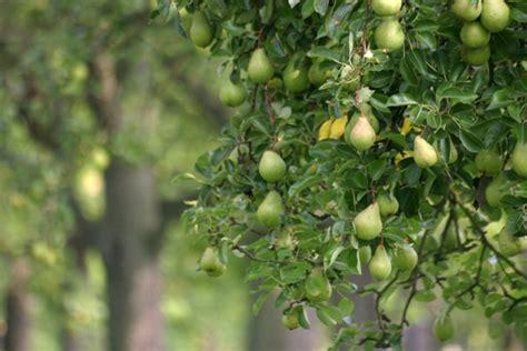 aaa tree farm aaa tree service may 2013