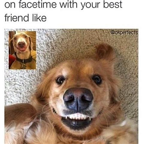 Best Friend Memes - 17 best ideas about best friend meme on pinterest funny
