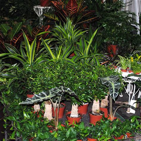 fensterbank innen hagebau herbst gartencenter gr 252 n und bl 252 hpflanzen herbst