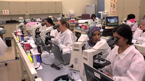 medical technologist medical lab technician ihiremedtechs