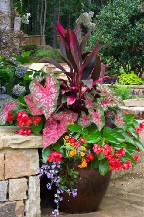 Garden Ideas In Autumn Bring Your Potted Plants Indoors Potted Plant Garden Ideas