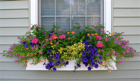 best flowers for window boxes shapes and forms of flowers for window boxes