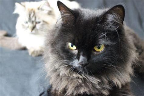 wie lange schlafen katzen wie lange kann katzen alleine lassen