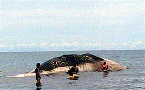 Produk Ukm Bumn Sarung Pantai gambar ikan hiu terbesar kedua dunia basking shark cinta