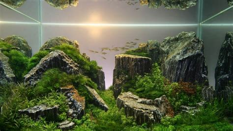 aquascape design layout furniture small fish coral reef water plants stunning