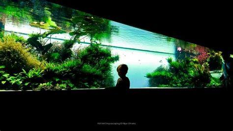 aquarium layout inspiration 17 best images about aquascape layout inspiration on