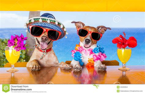 cocktail dogs cocktail dogs stock photo image 45230354