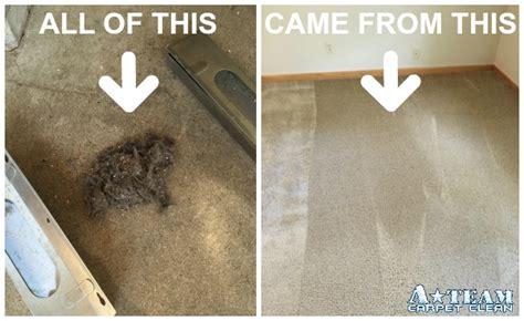 carpet deep cleaning     team carpet clean
