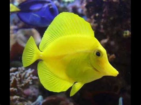 fotos animales marinos animales marinos youtube