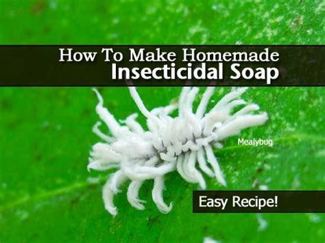 homemade insecticidal soap recipe diy