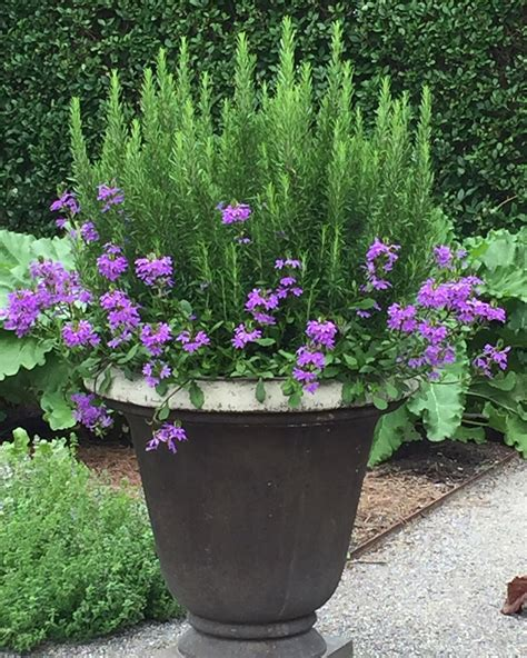 gardening pots and containers creative garden pots and planters