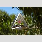 Fruit fly monit...