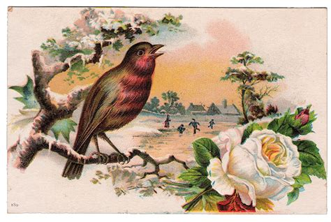 vintage new year songs free vintage graphic beautiful bird with white