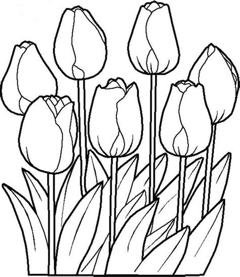 coloring pictures of tulip flowers tulip coloring pages print color craft