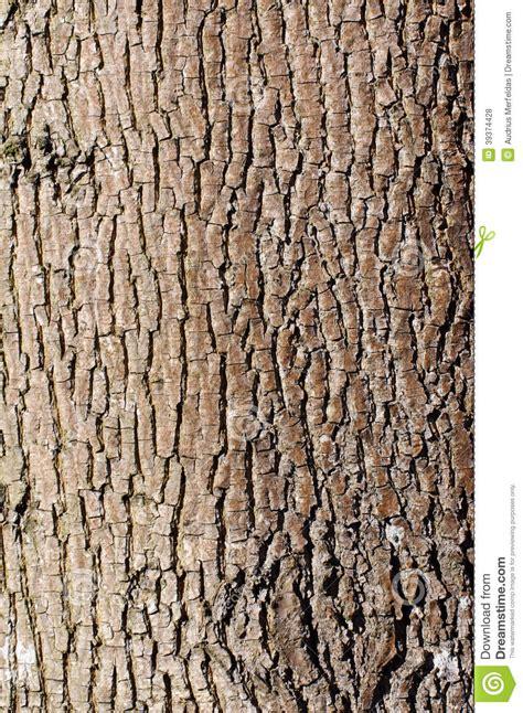 brown tree pattern brown tree bark texture in portrait orientation stock