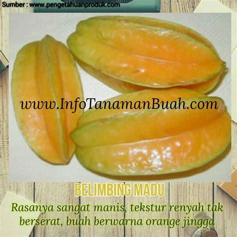 Jual Bibit Cengkeh Di Jawa Timur jual bibit durian di jawa timur jual bibit tanaman design bild