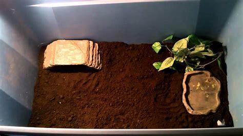 mfr sulcata tortoise setup youtube