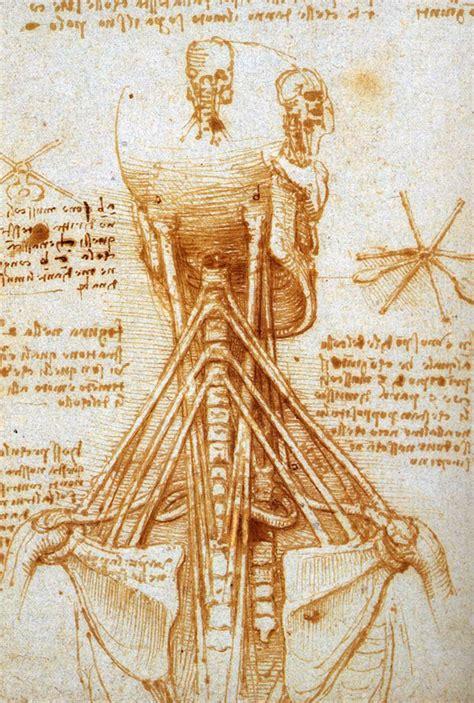 leonardo da vinci 1471166767 leonardo da vinci anatomical drawings neck