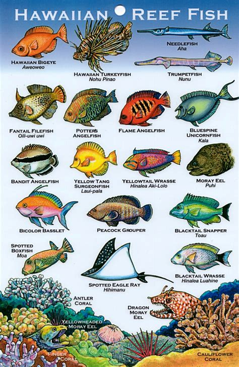 the ultimate guide to hawaiian reef fishes sea turtles names of fish s what is elmo s fish s name 2017 fish