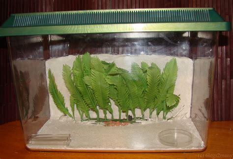 ant farms   build   formicarium legsmany