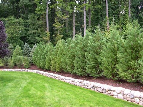 small trees and shrubs for landscaping in front yard hot landscaping truesdale landscaping best trees and plants for privacy