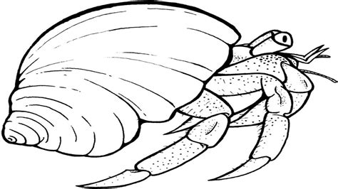 crab coloring template hermit pages grig3 org