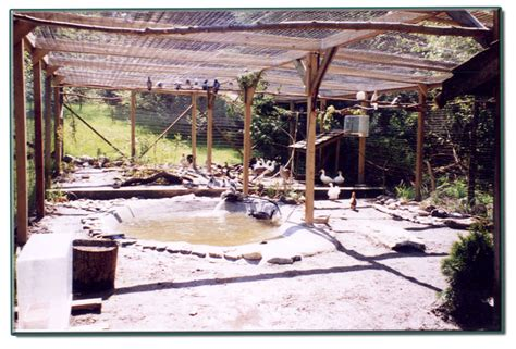 backyard aviary outdoor bird aviary for sale image search results