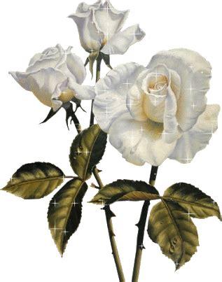 imagenes de rosas blancas y rojas animadas amantes del punto de cruz rosas blancas