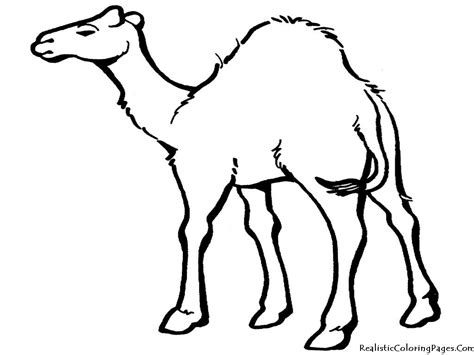 coloring pages of land animals camel coloring pages realistic coloring pages coloring
