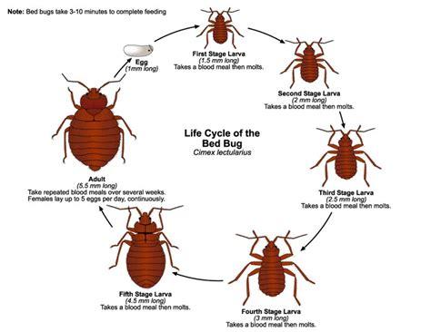 bed bugs fumigation health nigeria