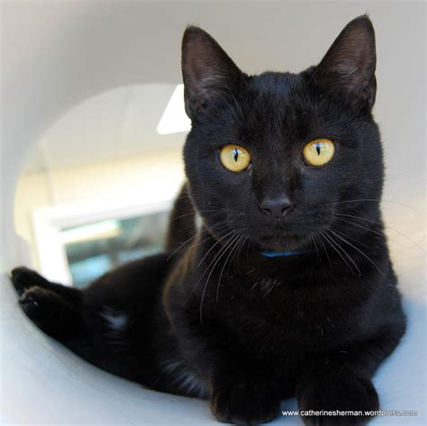 Hug A Black Cat And Play Scrabble Today Catherine Sherman Black Cat