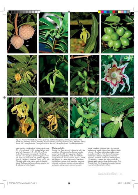 encyclopedia of tropical plants new encyclopedia of tropical plants by ahmed fayaz hardcover free shipping 1742232906 ebay