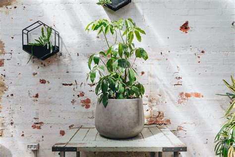 in door plant put in pot vide indoor plants that purify the air plus the pots to put