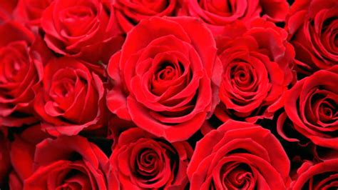 valentines pictures s day quotes and ideas history history