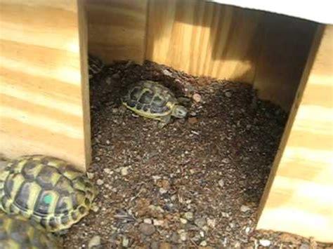 gabbia per tartarughe di terra tartarughe e il richiamo per la pappa