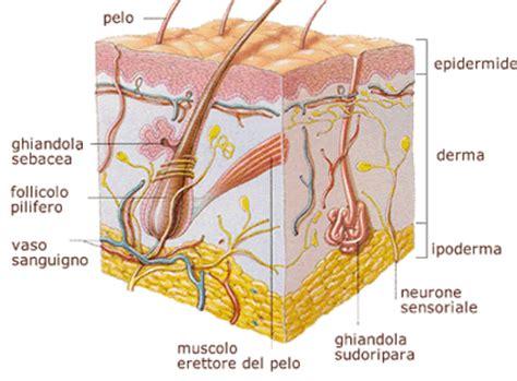 brufoli e alimentazione acne il potere cibo