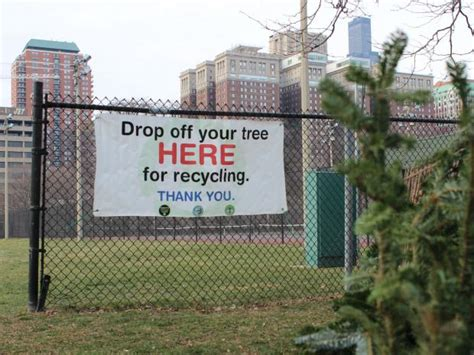 christmas tree recycling made easier with north center