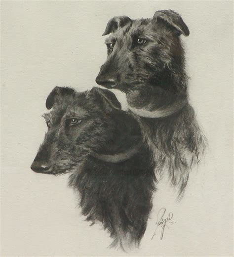 charcoal for dogs two wolfhound dogs charcoal drawing of two wolfhound dogs from enwoods on ruby