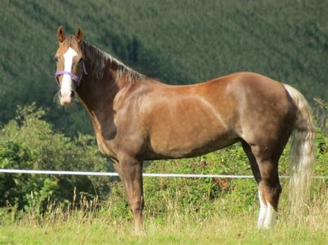 Section A Foals For Sale by Section D Mare Ammanford Carmarthenshire Pets4homes