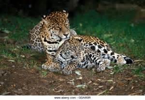 Kipepeo By Jaguar Jaguar Kenya Related Keywords Jaguar Kenya