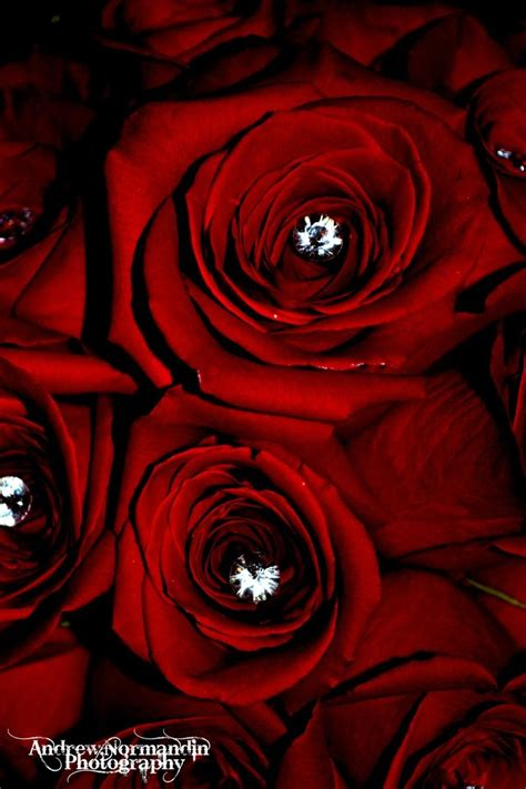 roses that last forever roses are red yet diamonds last forever by andrewnormandinphoto on deviantart