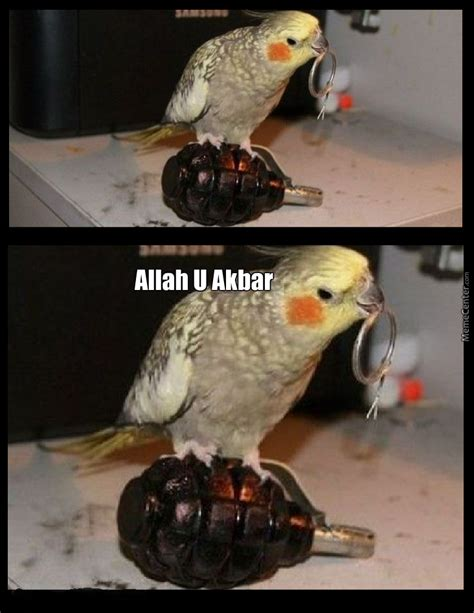 Bird Meme - syrian birds be like by king arthur meme center